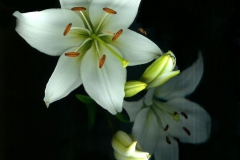 Lilly Ghost Lilly